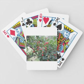 Cerises rouges de Montmorency sur l'arbre dans le Jeu De Poker
