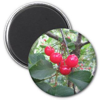 Cerises rouges de Montmorency sur l'arbre dans le Magnet Rond 8 Cm