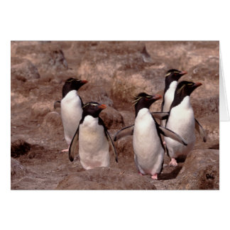 Ces cinq pingouins de Rockhopper (Eudyptes Carte De Vœux
