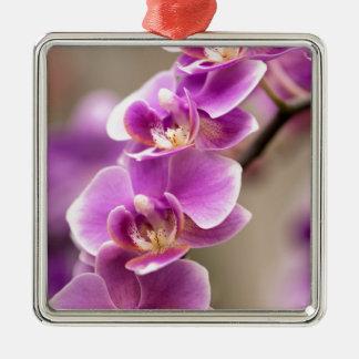 Chaîne de fleur rose-foncé d'orchidée de ornement carré argenté