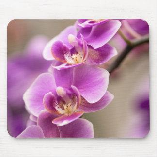 Chaîne de fleur rose-foncé d'orchidée de tapis de souris