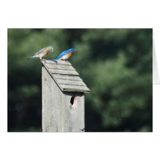 Chambre bleue d'oiseau, carte