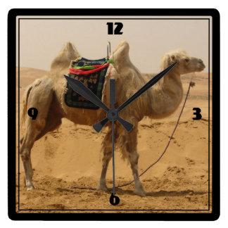 Chameau dans le désert horloge carrée