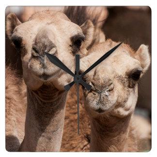 Chameaux au marché de chameau dans Al Ain près de Horloge Carrée
