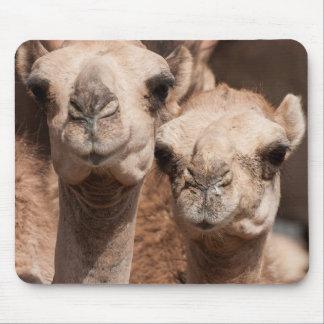 Chameaux au marché de chameau dans Al Ain près de Tapis De Souris