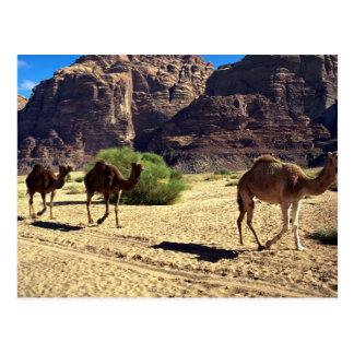 Chameaux dans le désert du rhum de Wadi, désert de Cartes Postales