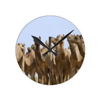 Chameaux dans le désert, Pushkar, Ràjasthàn, Inde Horloge Ronde