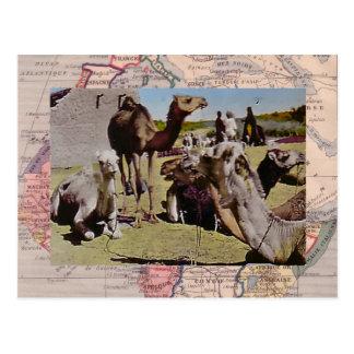 chameaux pour la location carte postale - Location De Chameau Pour Mariage