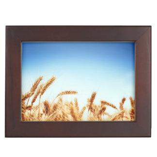 Champ de blé contre le ciel bleu boîtes à souvenirs