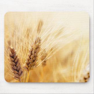 Champ de blé tapis de souris