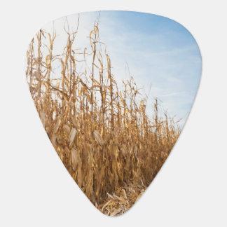 Champ de maïs en partie moissonné onglet de guitare
