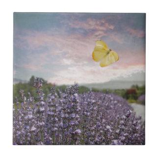 Champ des fleurs de lavande, ciel bleu, coucher du carreau