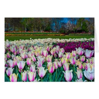 Champ des tulipes carte de vœux