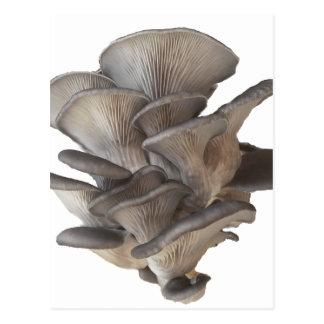 Champignon d'huître carte postale