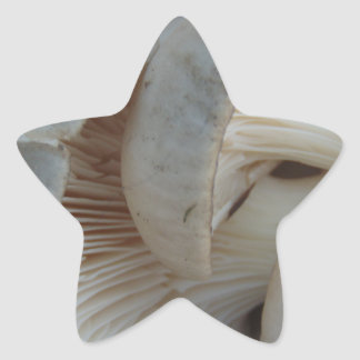 Champignons d'huître sticker étoile