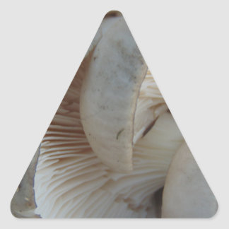 Champignons d'huître sticker triangulaire