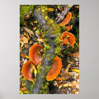 Champignons s'élevant sur des branches, le posters