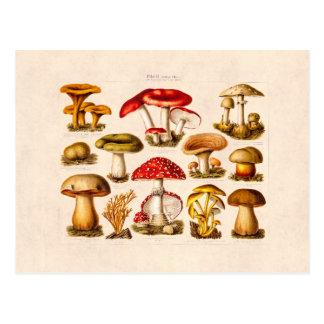 Champignons vintages de rouge de variété de carte postale