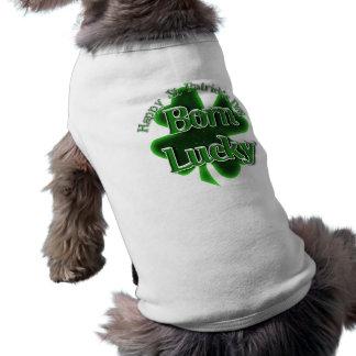 Chanceux né - le jour de St Patrick heureux Tee-shirts Pour Chien