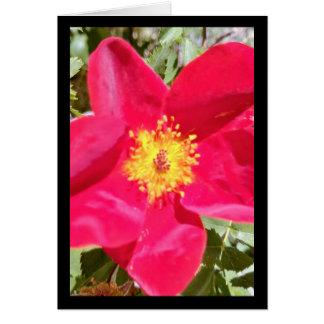 Chanson florale de poinçon de velours de cartes