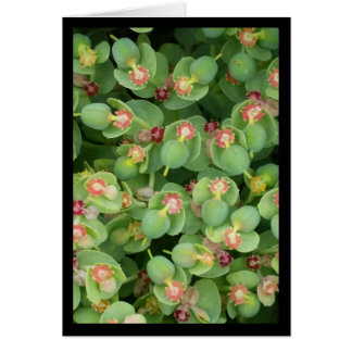 Chanson verte minuscule de flore de solénoïde. carte de vœux