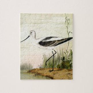 Charadriidés vintages d'espèce marine, oiseaux puzzle