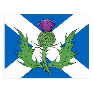 Chardon écossais et Saltire Carte Postale