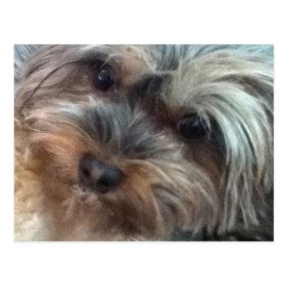 Charlotte la carte postale de petit chien