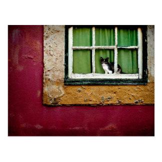 Chat à la fenêtre carte postale