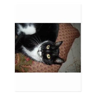 Chat adopté heureux carte postale