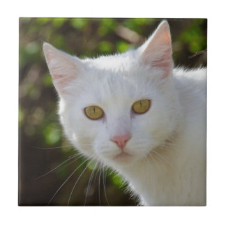 Chat blanc avec les yeux jaunes petit carreau carré