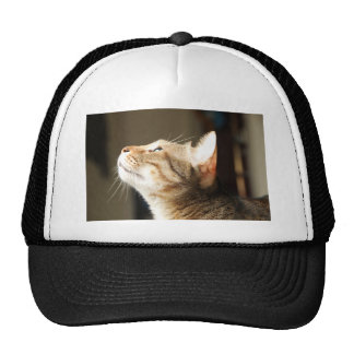 chat casquette de camionneur