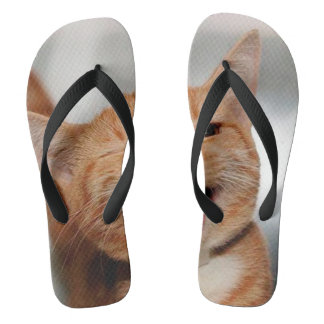 Chat clignant de l'oeil - chat orange - les chats tongs
