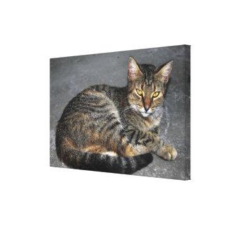 Chat créole de Martinique Toiles