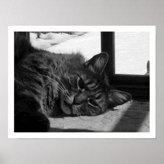 Chat dans la fenêtre poster