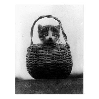 Chat dans une photo de cru de panier carte postale