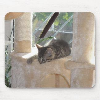 Chat de bébé tapis de souris