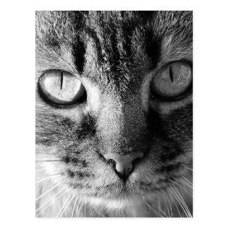 Chat de Kitty Carte Postale