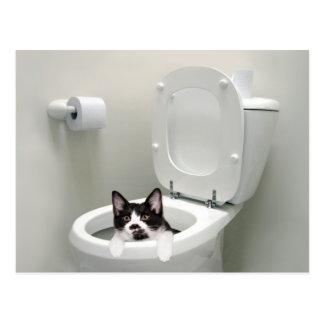 Chat de Kitty dans la cuvette des toilettes Carte Postale