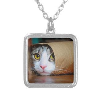 Chat de papier - chats drôles - meme de chat - collier