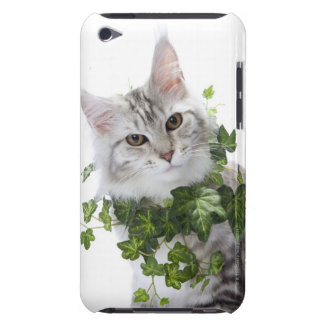 Chat de ragondin du Maine et ornement de lierre Coque iPod Touch Case-Mate