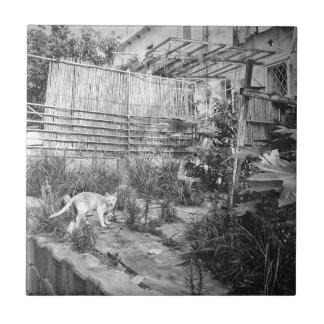 chat de rue petit carreau carré