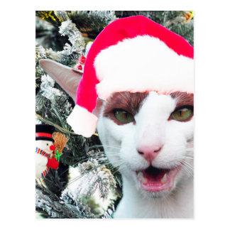 Chat de sifflement dans un chapeau de Père Noël Carte Postale