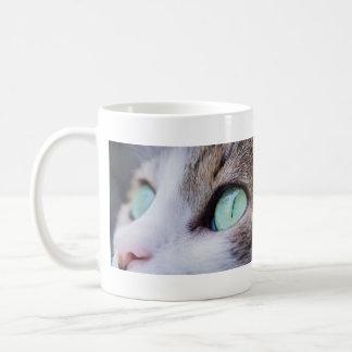 Chat de tigre gris aux yeux verts magnifique mug