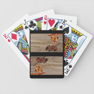 Chat de tigre orange regardant fixement la souris jeu de cartes