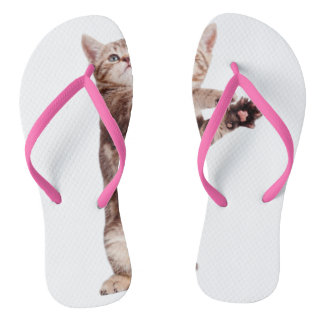 Chat debout - minou - animal familier - félin - tongs