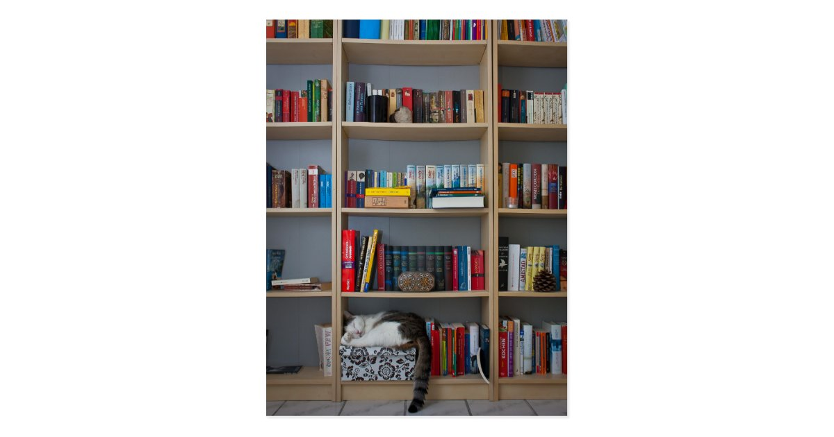 chat dormant dans des livres de biblioth que carte postale zazzle. Black Bedroom Furniture Sets. Home Design Ideas