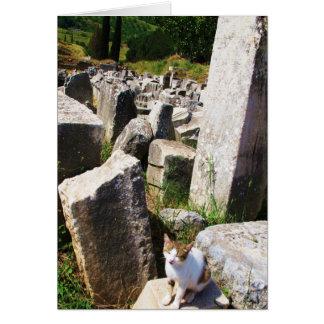 Chat égaré adorable vivant dans les ruines carte de vœux