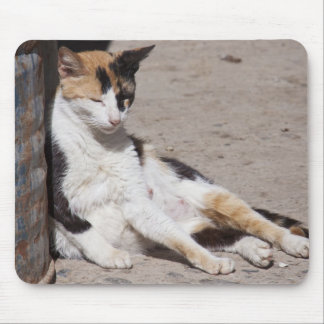 Chat égaré dans Fes la Médina, Maroc Tapis De Souris