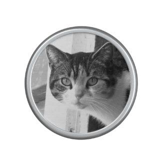 Chat en noir et blanc haut-parleur